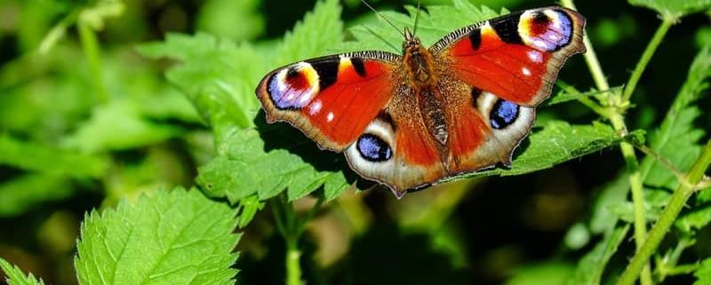 Hope spreads its butterfly wings