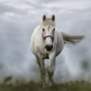 """""""Asking for help isn't giving up,"""" said the horse, """"It's refusing to give up."""""""
